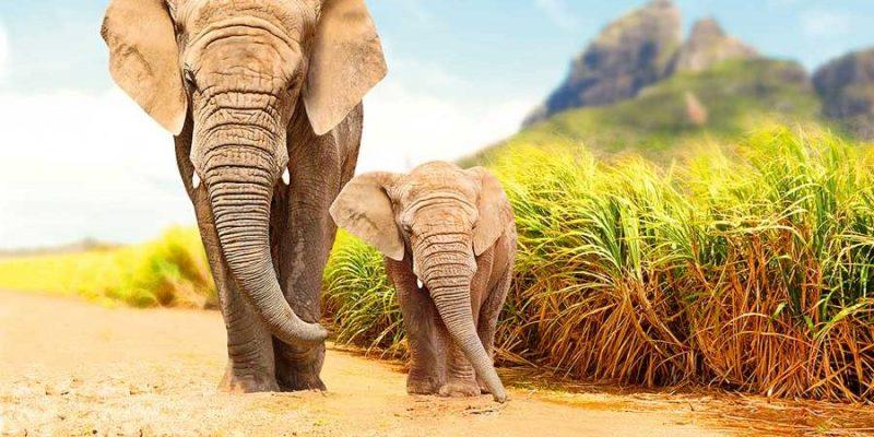 boulevard-hannover-airport-suedafrika-safari-elefanten