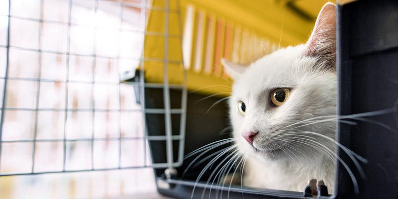 Katze im Flugzeug mitnehmen