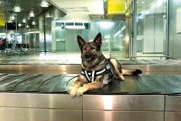 boulevard-hannover-airport-zollkontrolle-hund-gepaeckband