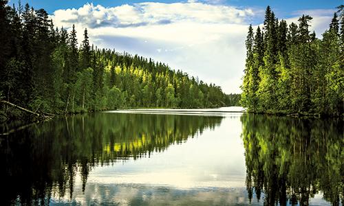 Helsinki-See-Wald