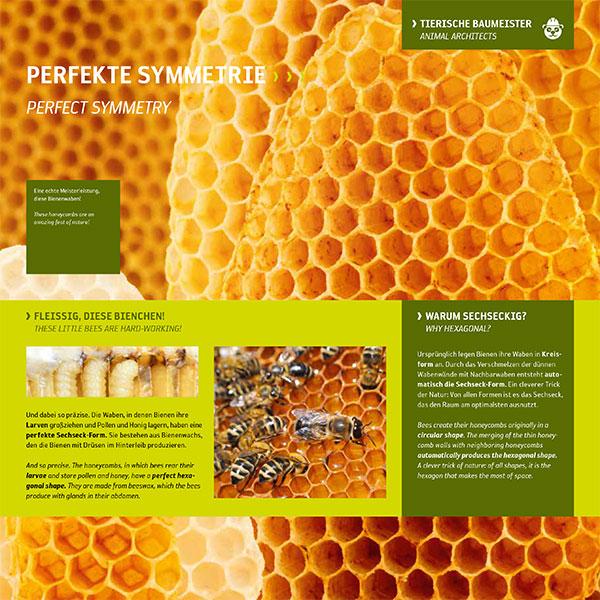 Bienenwaben-Larven im Bienenstock-Bienen-Sechseck Form