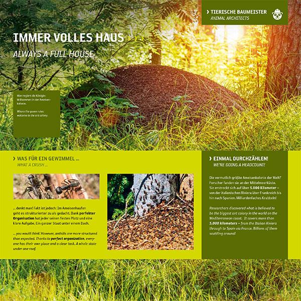 Ameisenhügel-Ameisen-Bau-Wald