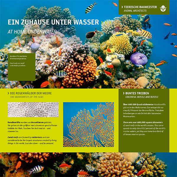 Korallenriff-Unterwasserwelt-Fische-Struktur