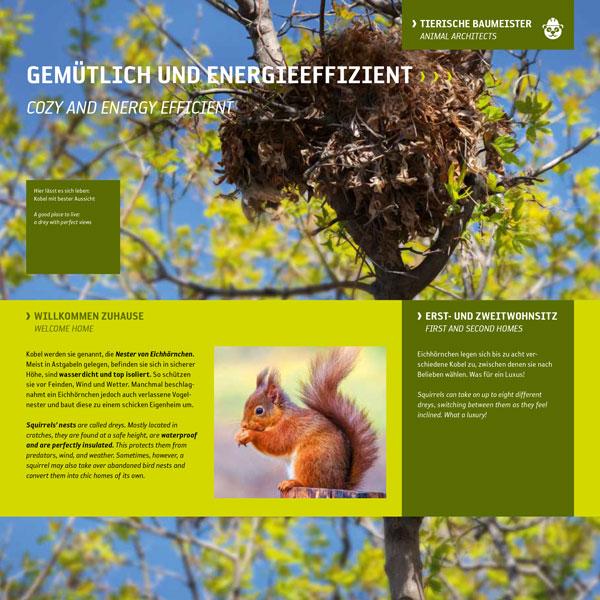 Eichhörnchen-Nestbau-Kobel-Astgabel