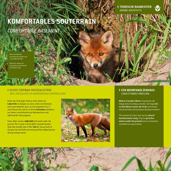 Junger Fuchs-Fuchsbau-Loch-Roter Fuchs