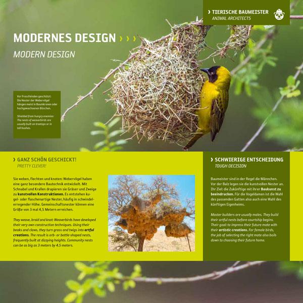 Nestbau-Webervogel-Baukunst-Nest Baum-Namibia