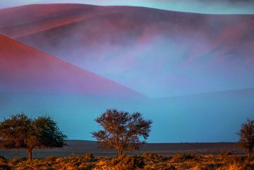 Bäume-Afrika-Sanddühnen