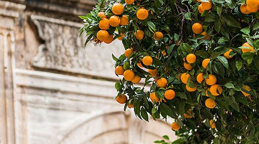 boulevard-hannover-airport-malaga-architecture-oranges