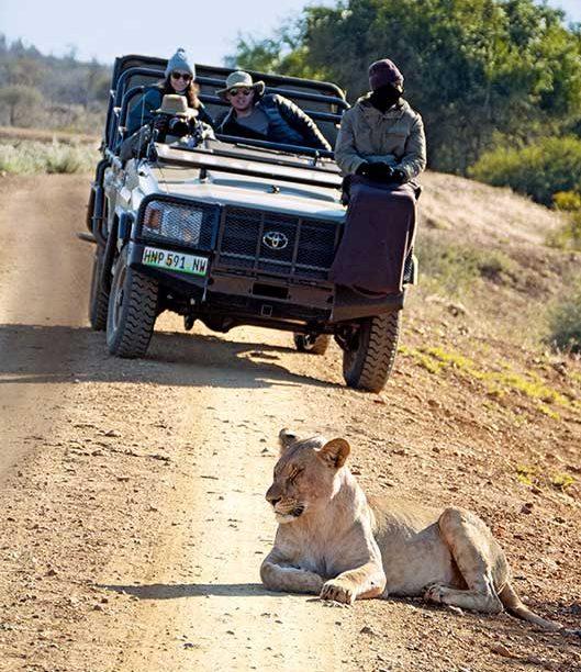 boulevard-hannover-airport-suedafrika-safari-range-rover-loewe